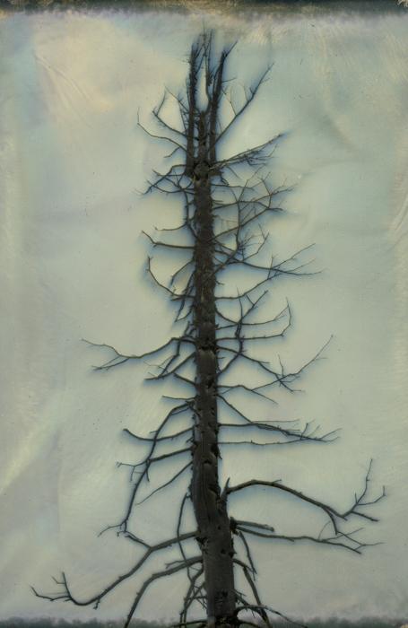 Chromoskedasic Sabattier by Megan Crawford