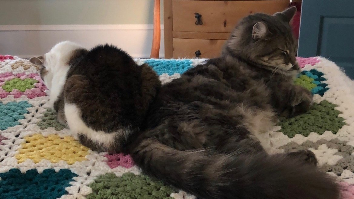 two cats on a bed