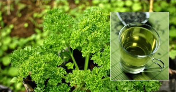 parsley-tea (1)