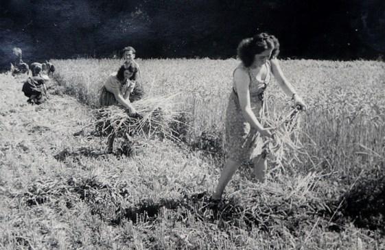 Getreideernte in der Au ca. Ende 1930er Jahre v.r.n.l. Felicitas und Waltrudis Nassen