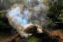 Charbonnières des garrigues