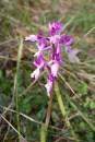 2012-04-28-Pont_Ponadieu-USC_Drap-IMG_8669-la