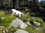 2012-08-26-Lacs_Fremamorte-Altiplus-IMGP0184