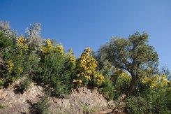2014-03-02-Altiplus-Pegomas-Tanneron-Mimosa-Joelette-IMG_4155