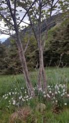 Alti Plus Samedi 19 Mai - Monte Cepo