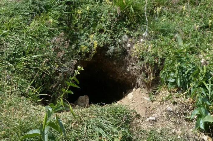 Des travaux sur les pistes d'Albiez-Montrond menacent les marmottes !