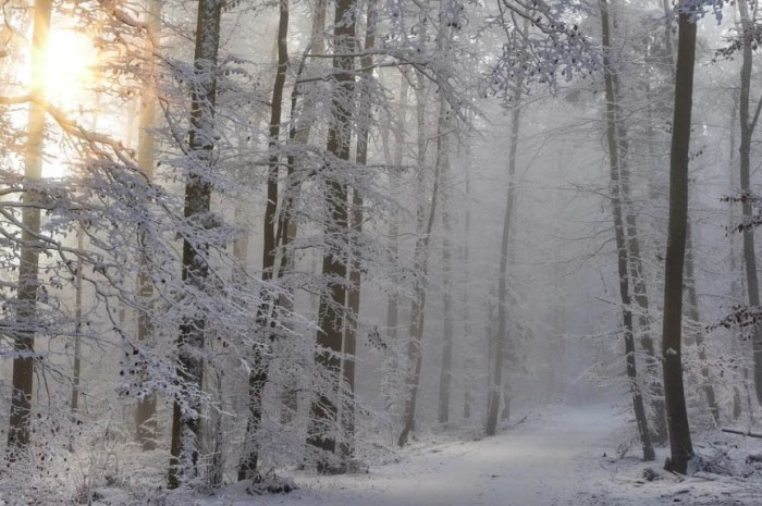 Cet hiver, pratiquez le bain de forêt japonais à Morzine !