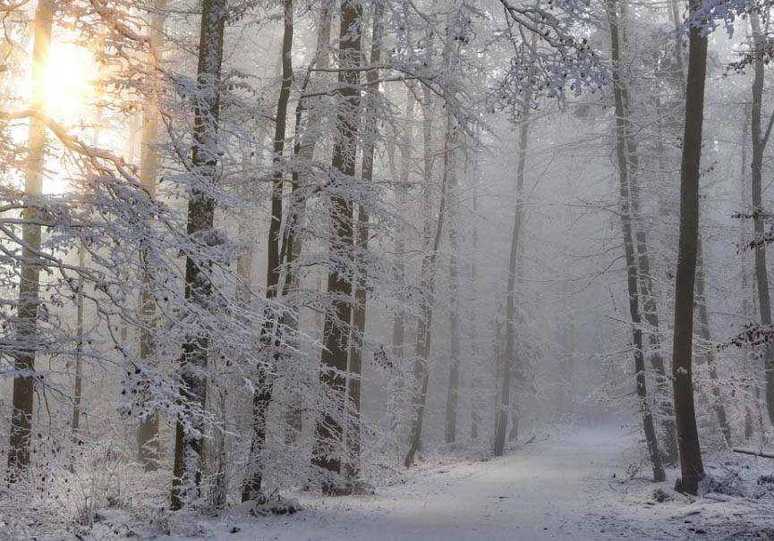 Bain de forêt Morzine