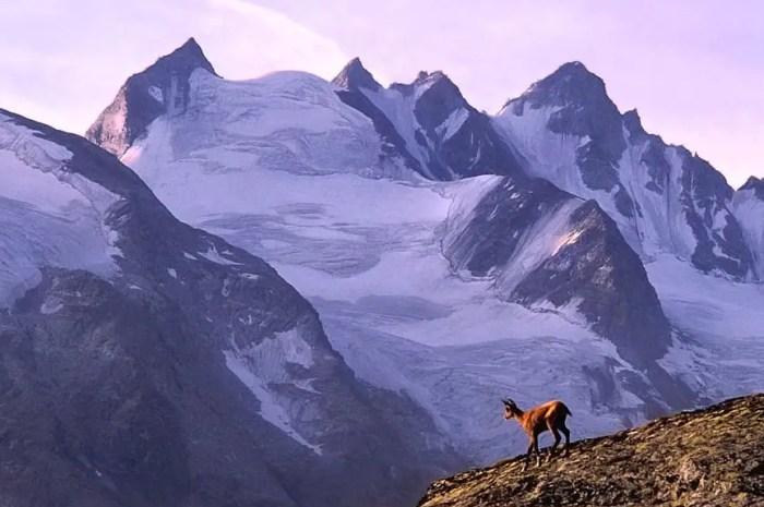 Les 116km du Trek Nature Grand Paradis Vanoise !