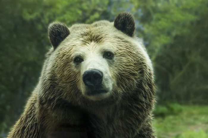 En prison pour avoir approché un grizzly dans le Parc du Yellowstone