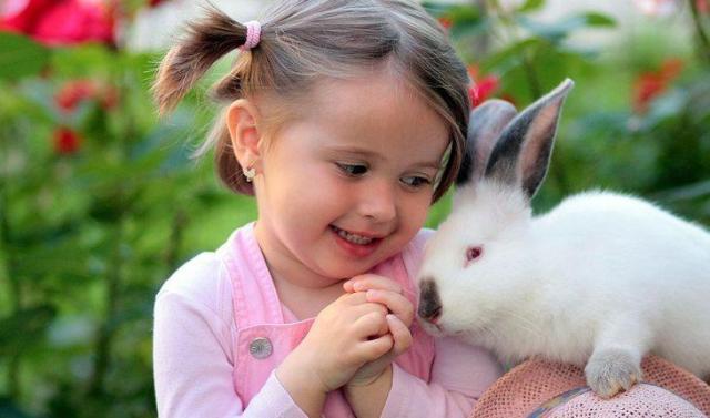 Curiosidades sobre coelhos. Na foto, uma menininha e um coelho branco