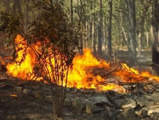 Umbria in fiamme, incendi nella zona della Pian d'Assino