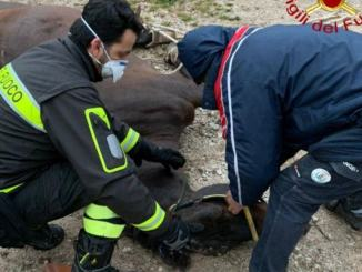 Un cavallo è caduto a Schiagni di Nocera, ferito lievemente