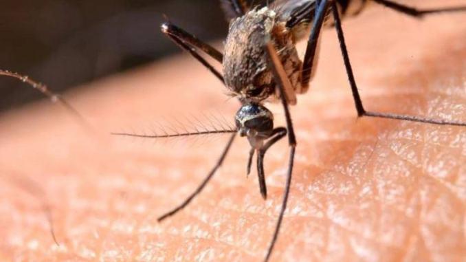 Misure preventive contro le zanzare a Gualdo Tadino