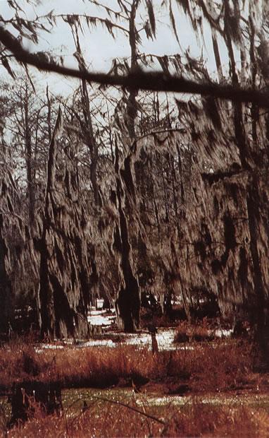 ol man river swamps