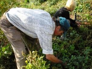 al lavoro nella fattoria alternativa foto di proprietà di eleonora casula yellowflate@gmail.com