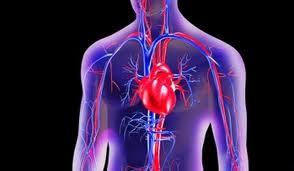 Dopo l'infarto il cuore si rigenera con molecole di Rna