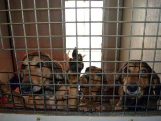 Affidata a Enpa la gestione del canile di Lerchi
