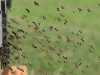 Umbertide Cambia, approvato ordine del giorno, apicoltura bene comune