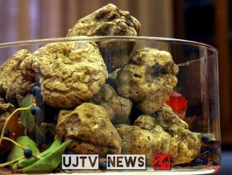 Mostra del Tartufo bianco, Trifola finger food, parmigiano e patata