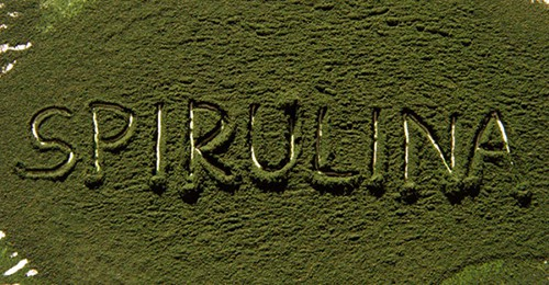 spirulina-powder-benefits-800x416