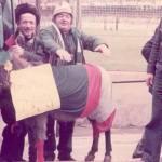 Esel im Marassi
