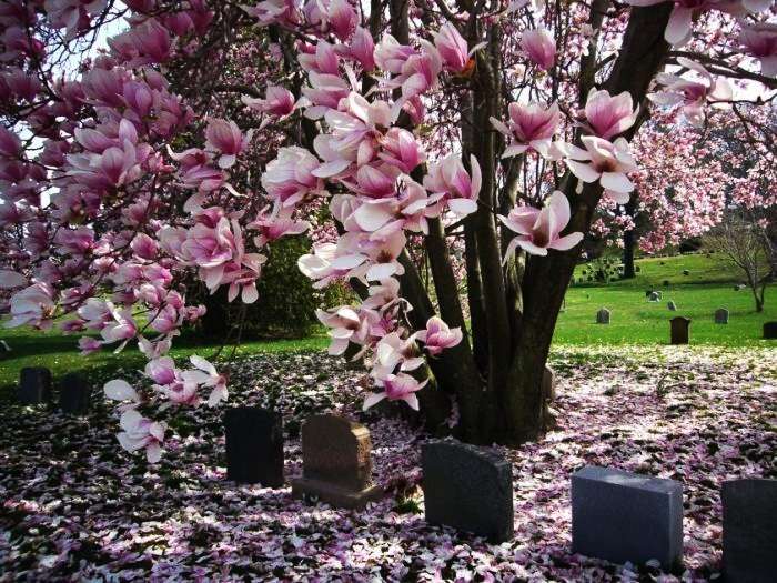 Most Beautiful Cemeteries In The World