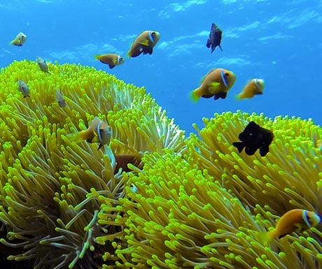 Park Hyatt Maldives Hadahaa Multiple Fish and Coral