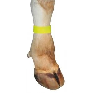Märkmelint jalale kollane