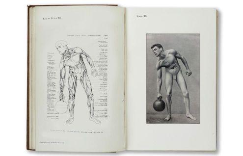 pagina 382 del libro a handbook of anatomy for art students