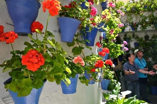 patios de flores