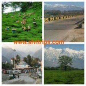 पालमपुर के पर्यटन स्थल