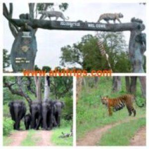 बांदीपुर नेशनल पार्क के सुंदर दृश्य
