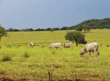 masalah pertanian dan solusi