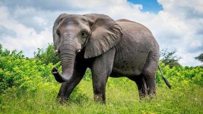 بالفيديو.. قطار يدهس قطيعا من الأفيال متسبباً بمجزرة