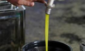 الزراعة تسمح باستيراد زيت الزيتون والبصل من مصر وفقا لتلك الشروط