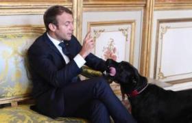 إيمانويل ماكرون وكلب
