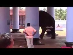 بالفيديو.. فيل غاضب يدهس رجلًا حتى الموت في معبد