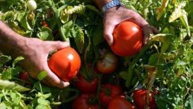 خلال شهر رمضان الزراعة تؤكد وفرة المنتجات في السوق المحلي