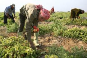الاتحاد الأوروبي يُقدم مبلغ 2.37 مليون يورو لدعم المُزارعين الفلسطينيين