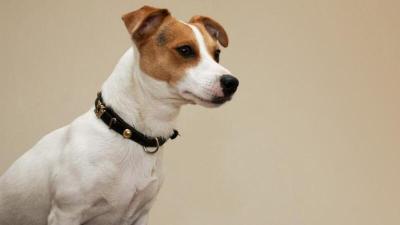 دراسة: الكلب يشعر بالاتجاهات كالطيور ويدرك الكلام كالبشر