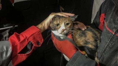 كلب بوليسي ينقذ قطة بعد 30 ساعة من زلزال إزمير