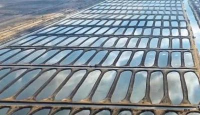 """الرئيس المصري يفتتح مشروعا ضخما """"للأسماك"""" في بورسعيد"""
