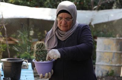 شاهد.. امرأة فلسطينية تعمل على زراعة أنواع مختلفة من صباريات الزينة