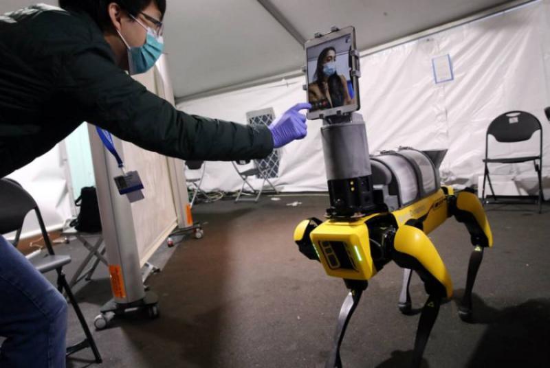 كلب آلي لعلاج المرضى عن بعد (صور)
