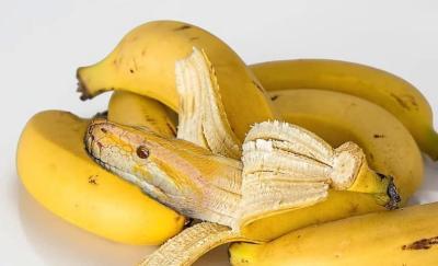 شاهد| ثعبان يشبه الموز في كندا
