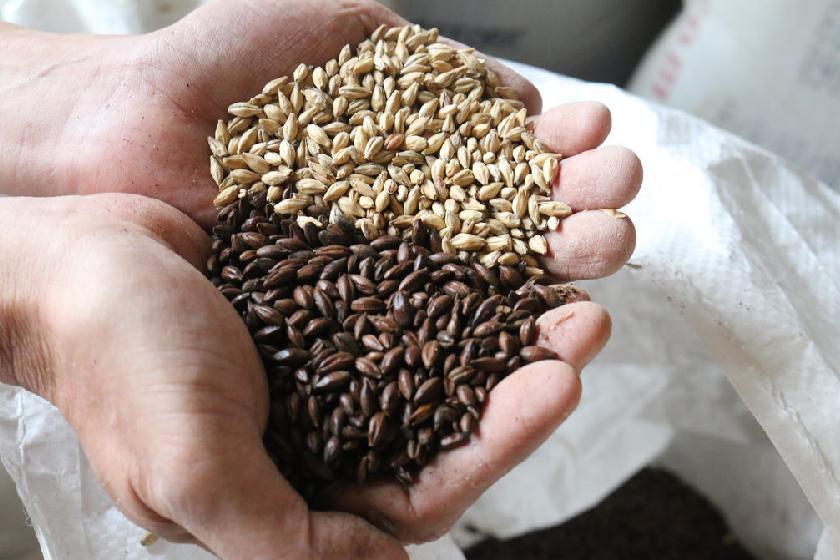 サンクトガーレン チョコレート麦芽