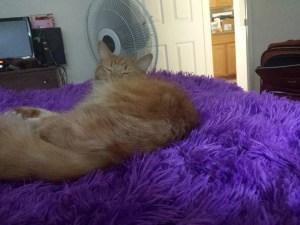 AlwaysReiding Purple Blanket