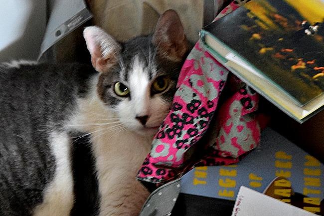 Cats_Know_AlwaysReiding