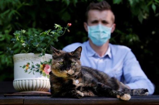 أيهما أفضل.. اصطحاب القطط في الرحلات أم تركها بالمنزل؟